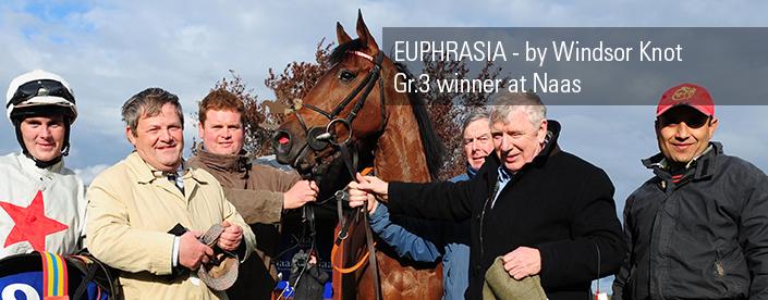 Euphrasia crop